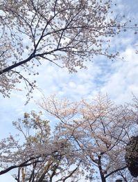20140329sakura03.jpg