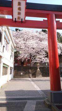 2018桜01.jpg